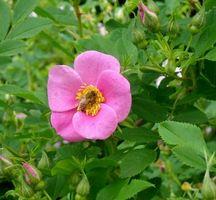 Brooklyn-botanic-flower